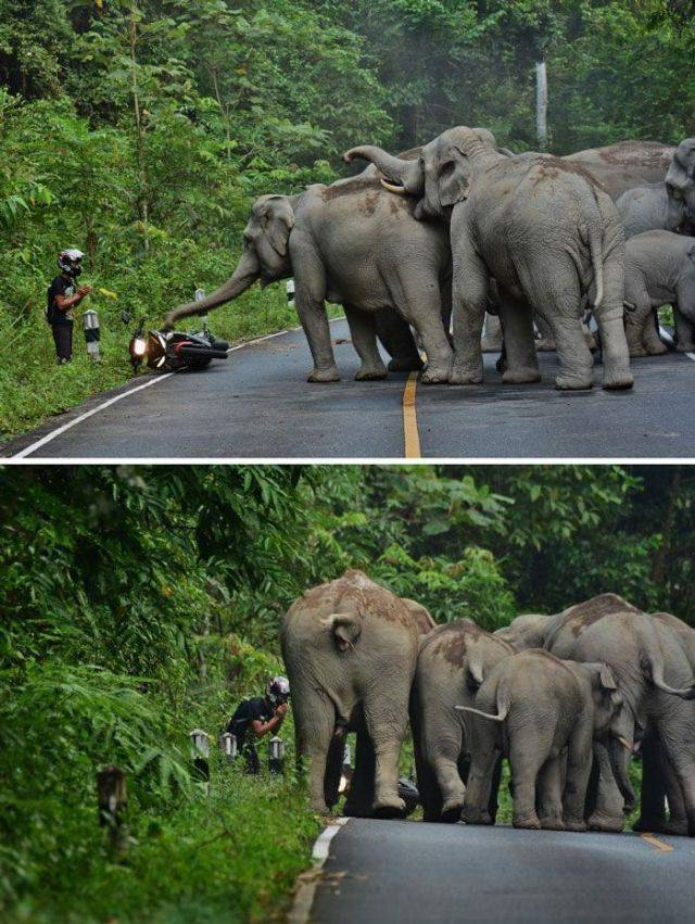 situations inexplicables - elephant