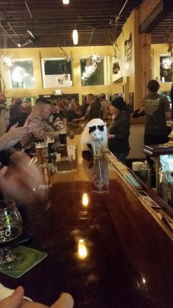 chat-boit-bar