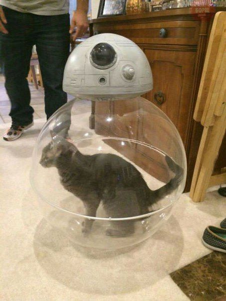 chat boule star wars
