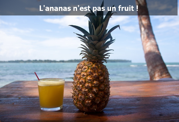 ananas-pas-un-fruit