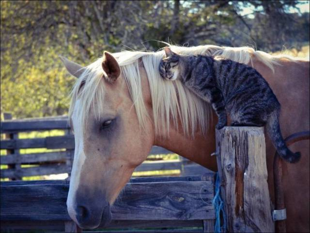 calin-cheval-chat