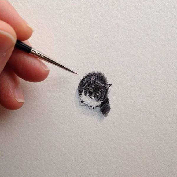 chat dessin