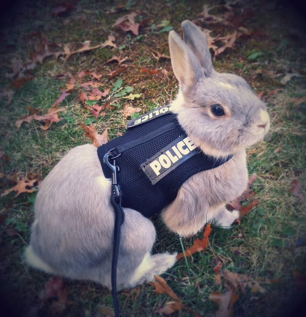 lapin police